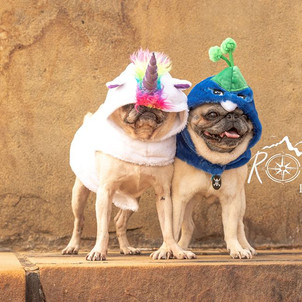 Two Pugs in Halloween Costumes