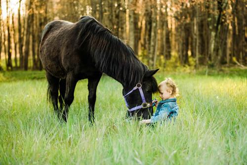 Pittsburgh Equine Photogrpher Molly & Batman - Pittsburgh Equine Photographer