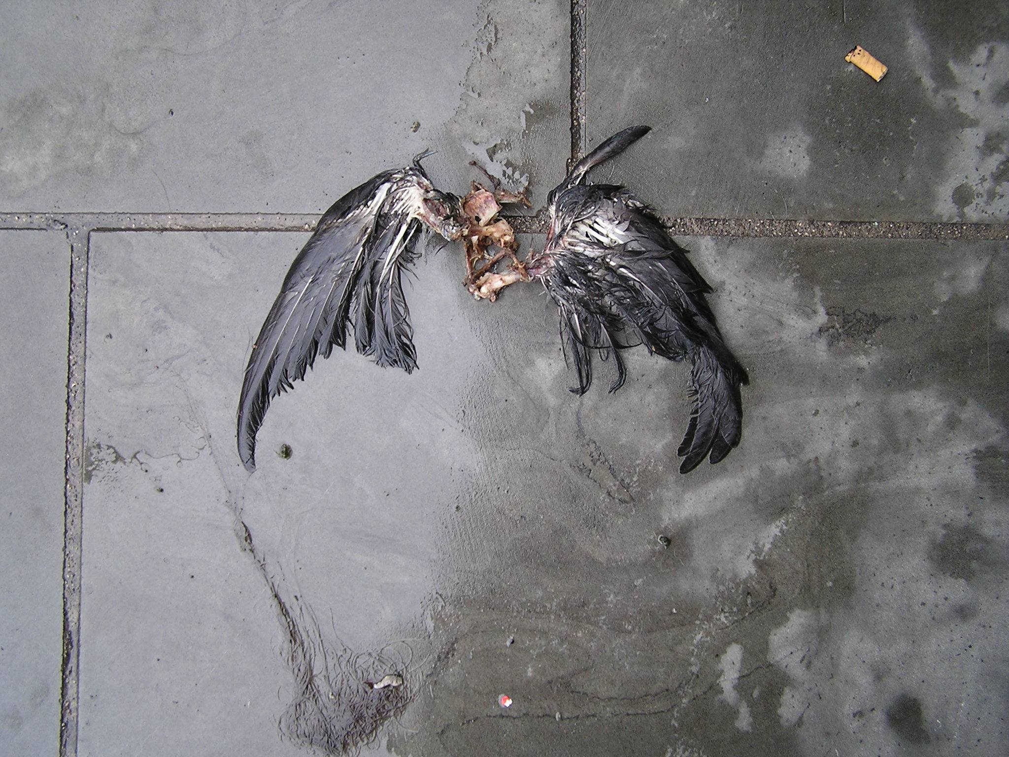 dalston wings 2012 das