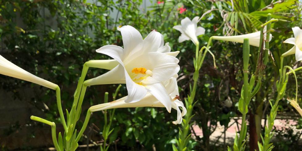 宮古島ゲストハウス シトラス 自慢の庭