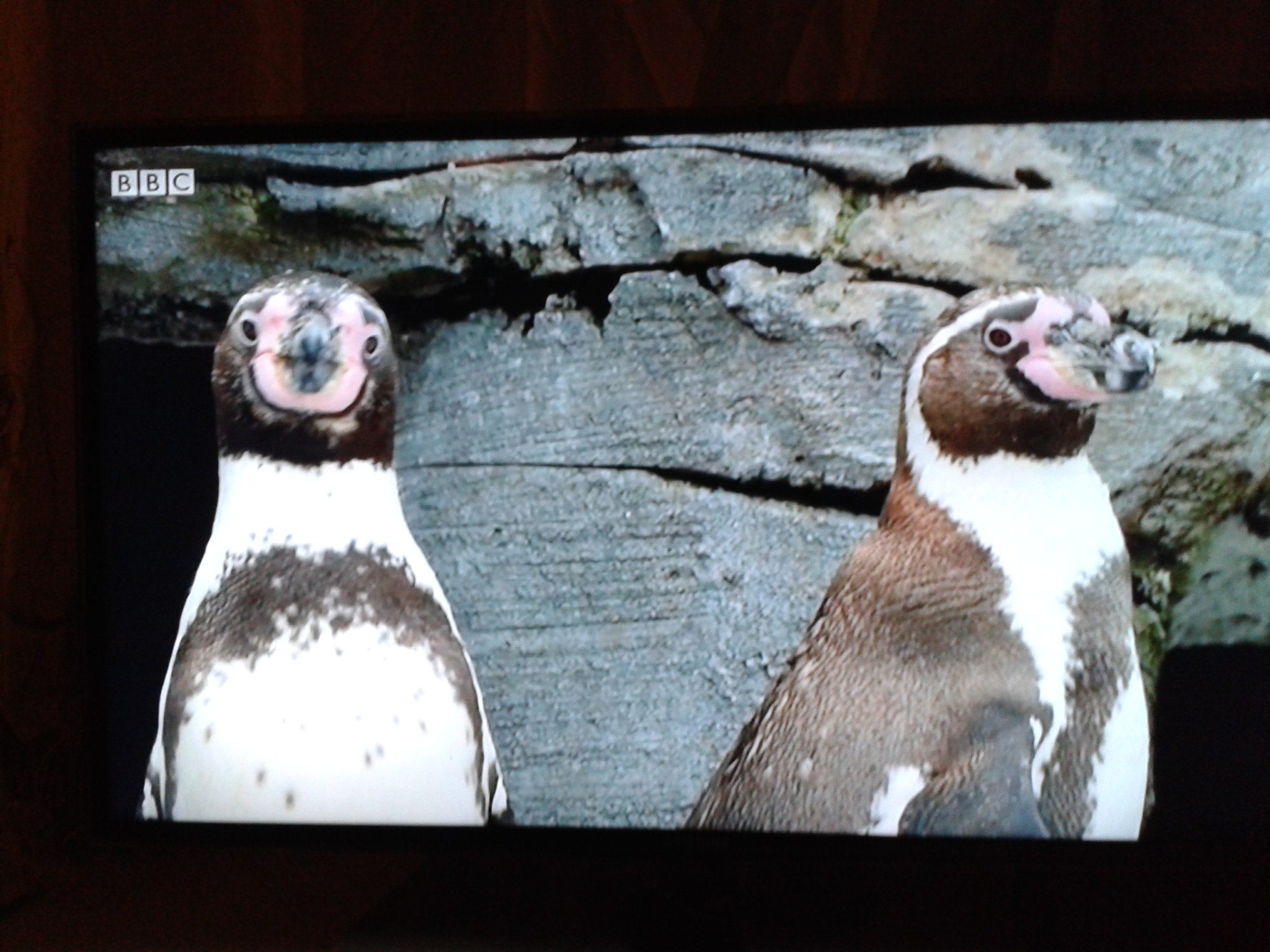2015-feb-03 penguins.jpg