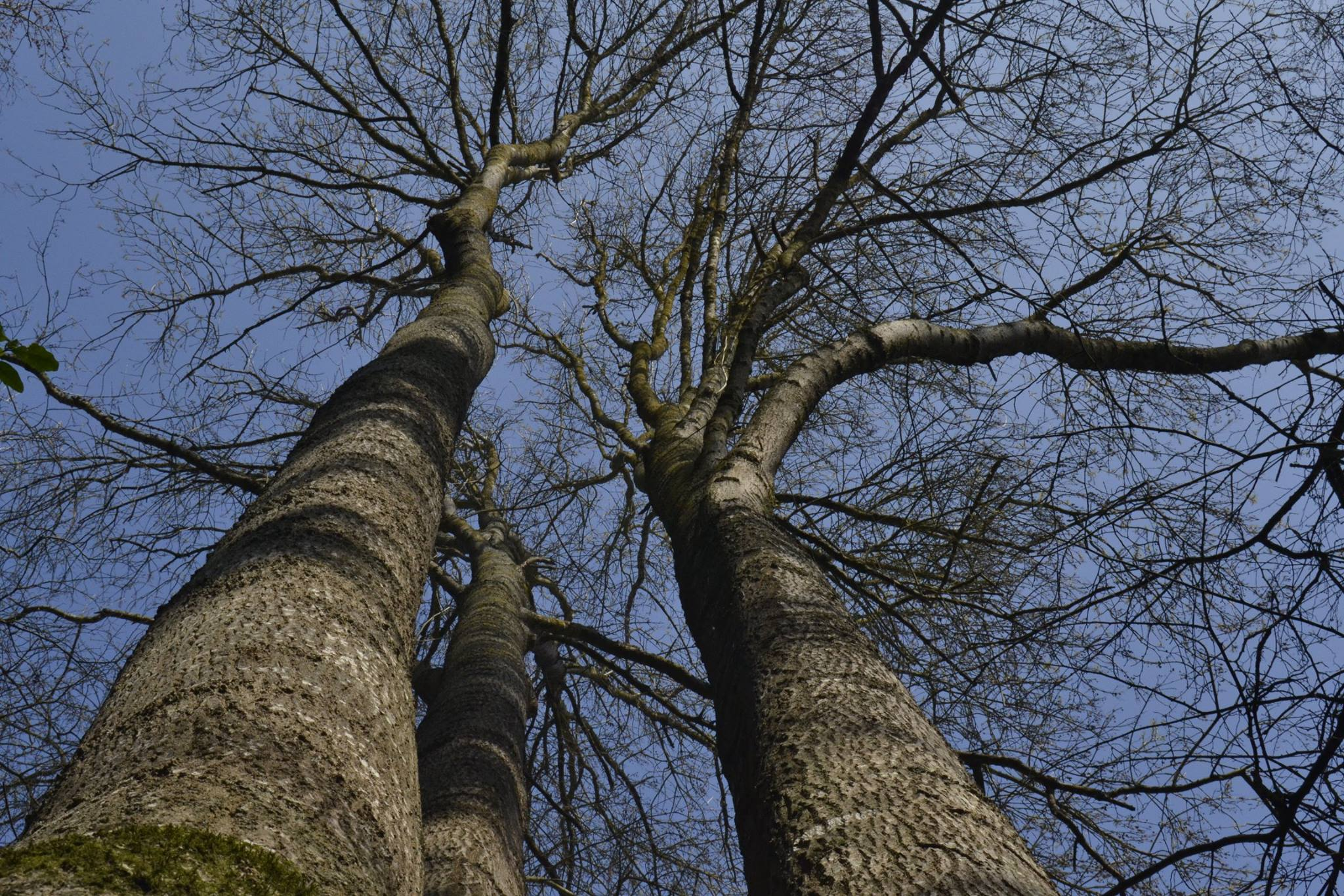 Petit Bois Savant
