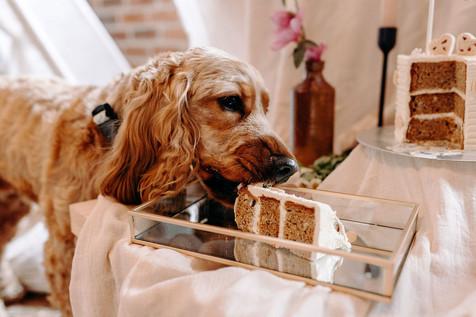 DoggieWedding-156.jpg
