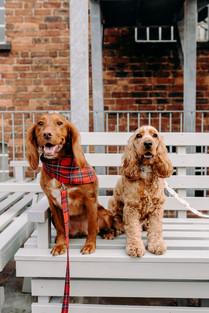 DoggieWedding-104.jpg