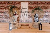 DoggieWedding-194.jpg