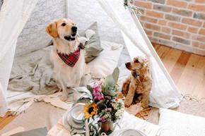 DoggieWedding-99.jpg