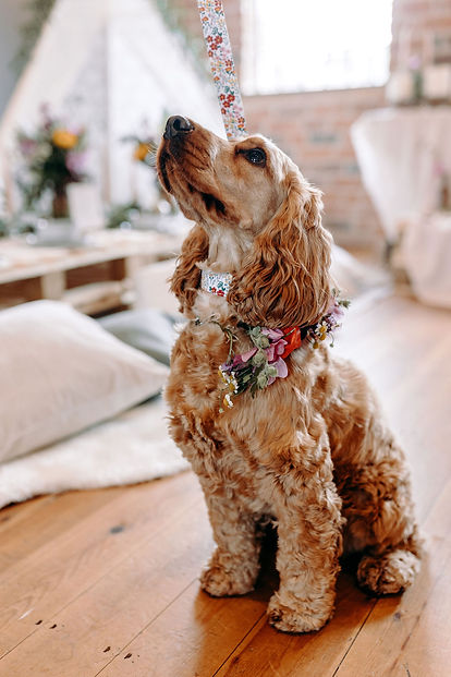 DoggieWedding-4.jpg