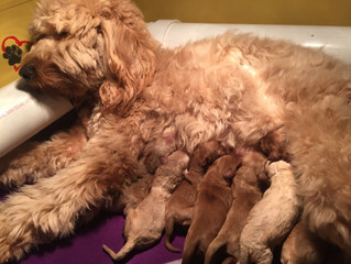 10 Beautiful Doodles ... Piper is the best mama!