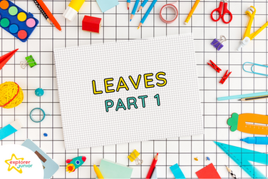 STEAM Activities: Introduction to Leaves Part 1