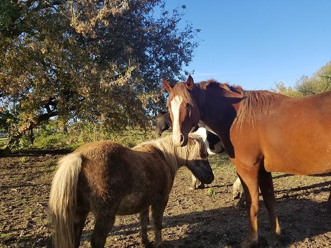 friendhorses.jpg