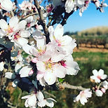 Beautiful Road Flowers _#perpignan #natu