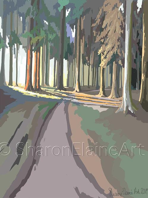 """Sheringham Park """"amongst the pines"""""""