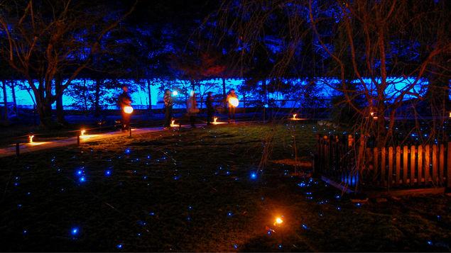 【青蓮院】秋のライトアップは幻想的…