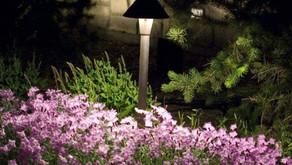 How to Create a Pet Friendly Backyard Garden