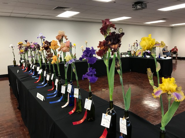Missouri Botanical Garden Bearded Iris Winners