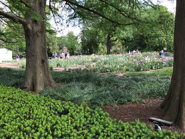 Missouri Botanical Garden Iris Show