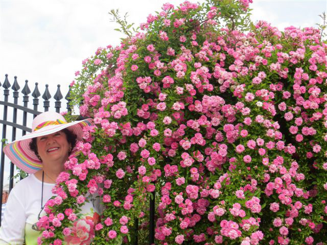 Peggy Martin with her namesake rose