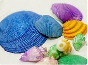 Painted Seashells.JPG