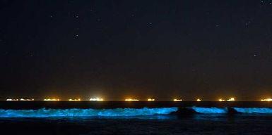 bioluminescent waves.jpg