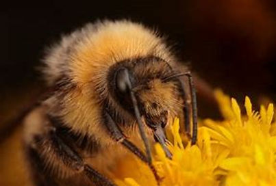 bee eating.jpg