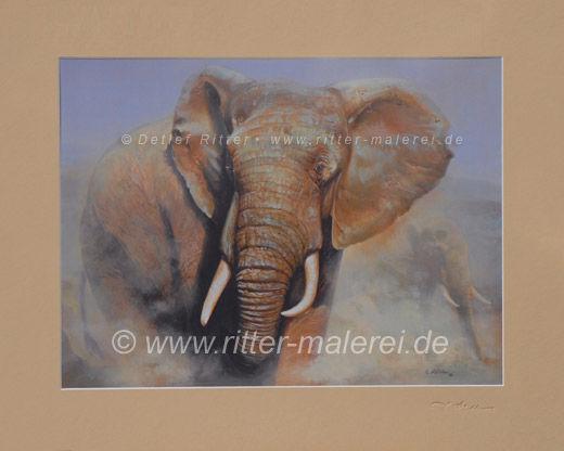 Elefant-01_g_b.jpg