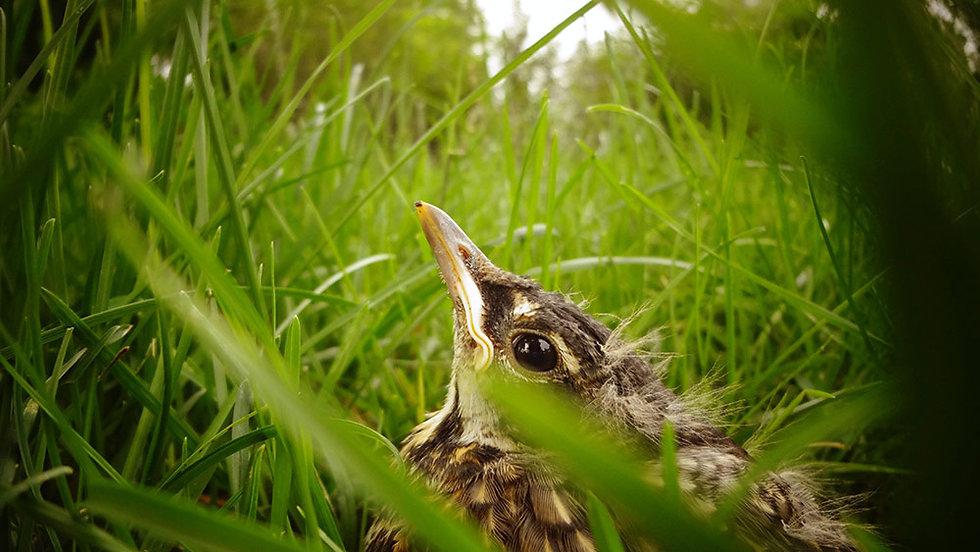 baby-bird.jpg