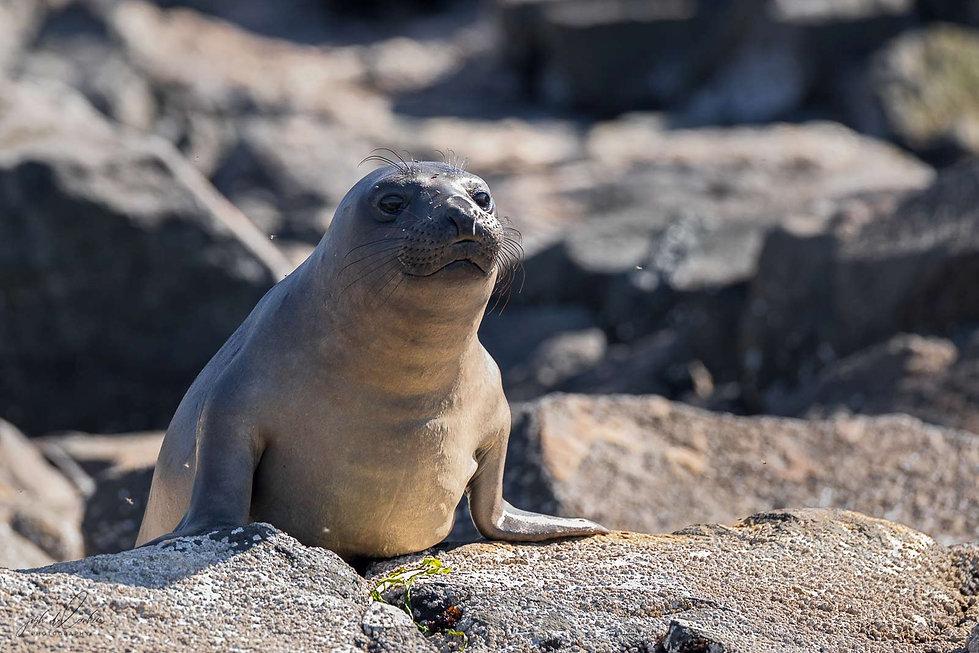 Elephant-Seal-2.jpg