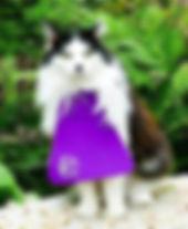 cat bib.jpg