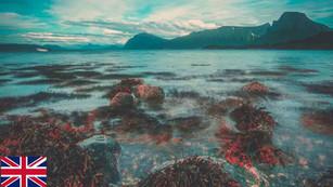 Seaweed in the Nordic cuisine