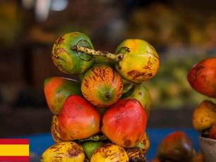 Chontaduro, el Fruto del Amor
