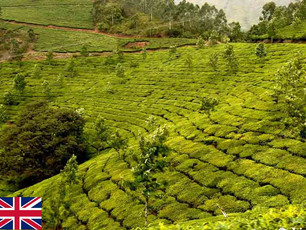 Munnar in India: «Chai Paradise» with a delightful cup of bliss!!!