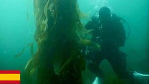 Algas marinas en Tasmania