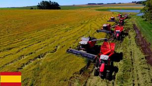La producción de arroz explosiona con las nuevas tecnologías