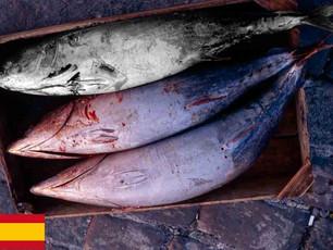 ¿Cómo es posible que se desperdicie un tercio de las capturas de pescado?