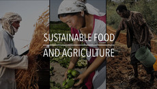 Sustainable Food and Agriculture - FAO