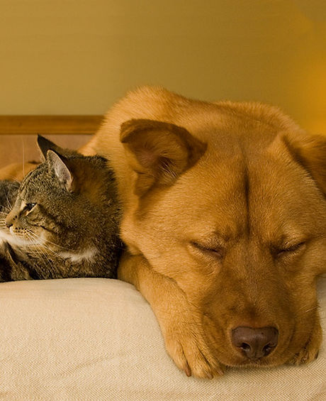 sleeping-animals.jpg
