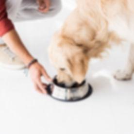 feed-dog.jpg