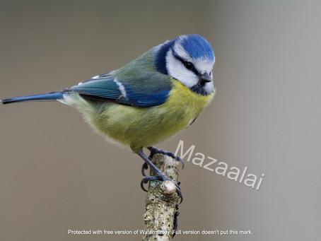 Sensibiliser les enfants à l'observation et à la protection des oiseaux des jardins !
