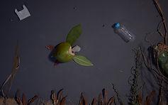 Save Our Species_still1.JPG