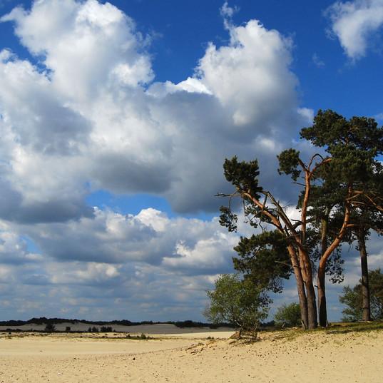 Landschapfoto in de Drunense Duinen
