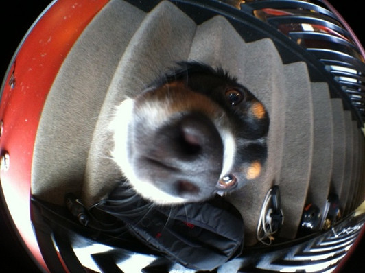 437_Oz_fisheye.jpg