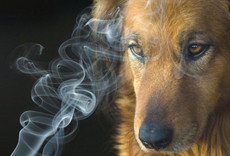 Tobacco Harms  Pets, Too