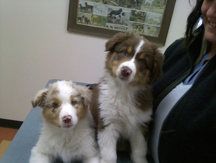 New clients Lolly & Dharma being sooo good at their first check-up.