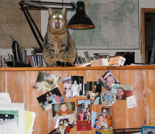Scary Wachs kitty!  Maybe we can do something about that...