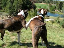 Best buddies Buck & Ray Colker