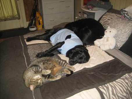 Kitty Goose relaxing after a long day with Maverick & Bo Bo