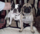 Meet French bulldog June Bug & pug Kirby!  Thanks Candice Mauti for sharing this adorable shot!