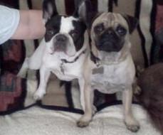 Meet French bulldog June Bug & pug Kirby!  Thanks Candice Mauti for sharing this adorable shot!