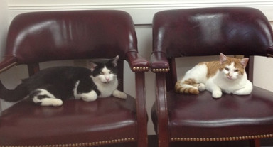 New clients Black Kitty & Yellow Kitty relaxing at the clinic.   Thanks Dan & Claudette for bringing them by!