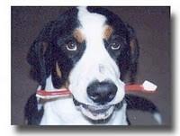 Dental Disease & Your Pet
